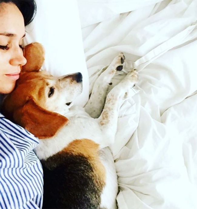 https://ca.hellomagazine.com/imagenes/celebrities/2017112344227/meghan-markle-dogs-living-with-mum/0-224-332/meghan-markle-and-her-dog-on-instagram-a.jpg