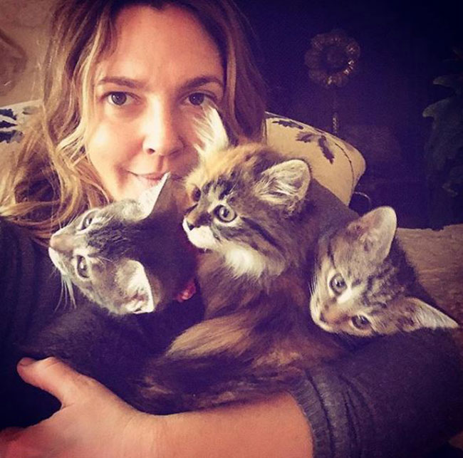 Instagram: Drew Barrymore holding three cats