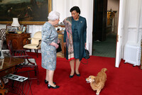 queen-and-corgi-at-windsor