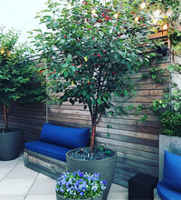8-Kelly-Ripa-house-terrace-plants