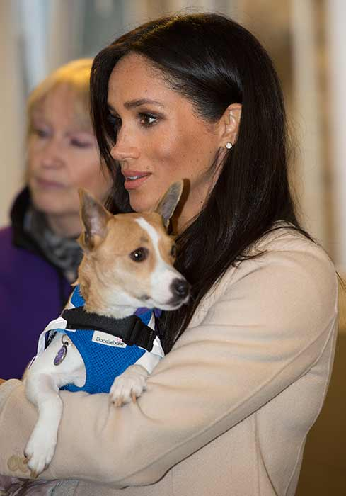 Meghan-Markle-Mayhew-dog-1
