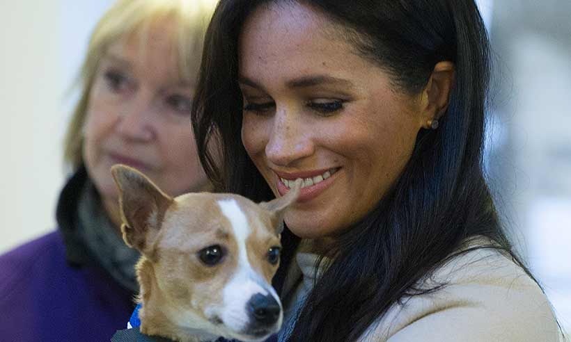 Meghan-Markle-Mayhew-dog-Minnie