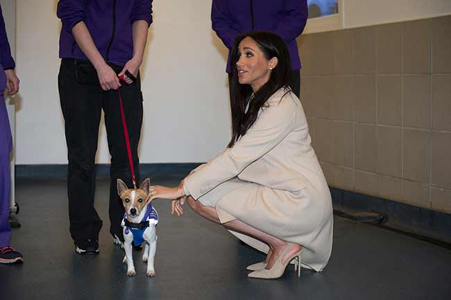 Meghan-Markle-Mayhew-dog