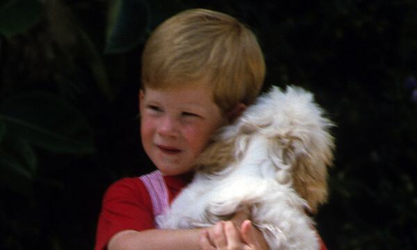 prince harry playing with a puppy