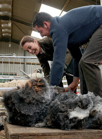 kate-middleton-sheep-shearing