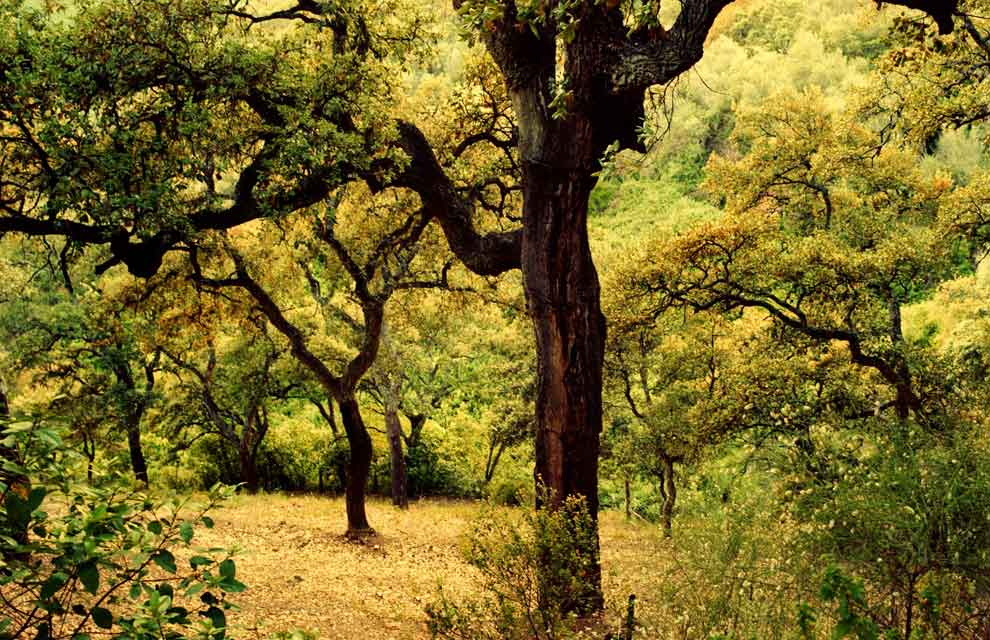Spanish Forests Autumn Colour Photo Gallery 2