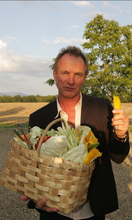 <h3>STING</h3> 