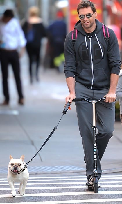 Hugh Jackman and his adorable French Bulldog, Dali, are truly a sight to behold. The buff star turned heads in New York City when he was spotted scooting around town with the smiling little guy.