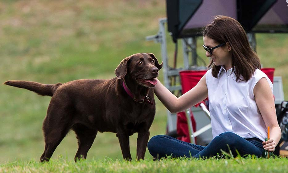 Kenobi the chocolate lab loves to spend time with Oscar-winning actress Anne Hathaway. 