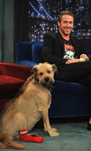 "In 2011, Ryan Gosling brought his mixed-breed dog, George (""he's some kind of muppet"" joked Ryan), to a taping of 'Late Night With Jimmy Fallon.' The fashionable canine sported a mohawk and a pair of red socks for the occasion. Said Ryan of the appearance: ""He's more interesting than I am, so I just thought it would be helpful.""