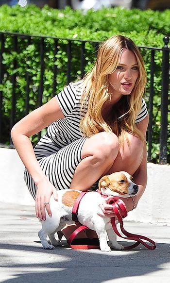 Baby's first Victoria's Secret shoot! Model Candice Swanepoel took her teeny Jack Russell puppy, Milo, to a lingerie photo shoot with her in New York City.
