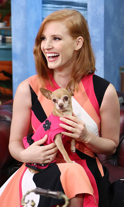 While promoting her new horror movie 'Crimson Peak,' Jessica Chastain has some fun with Univision Studio's resident pup, Honey Berry. Photo: © Getty Images