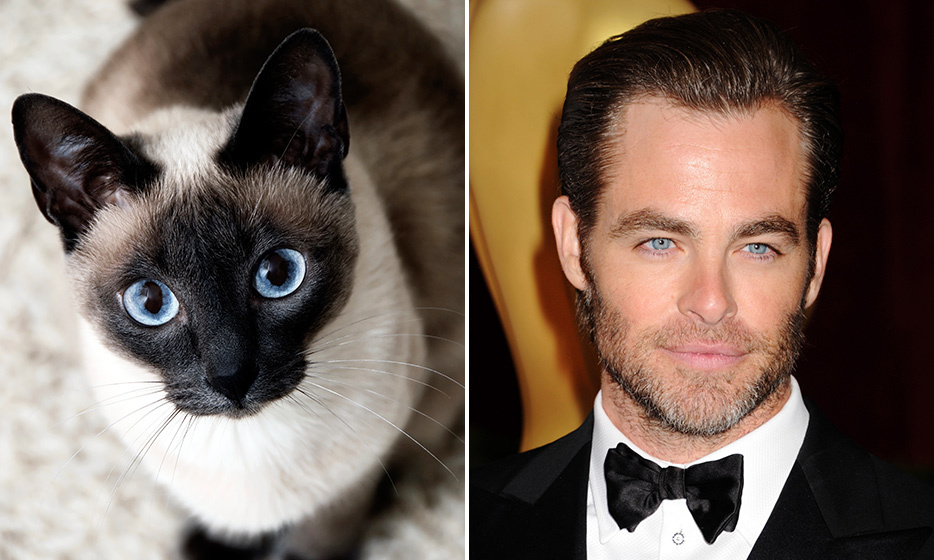 <h4>SIAMESE + CHRIS PINE</h4>