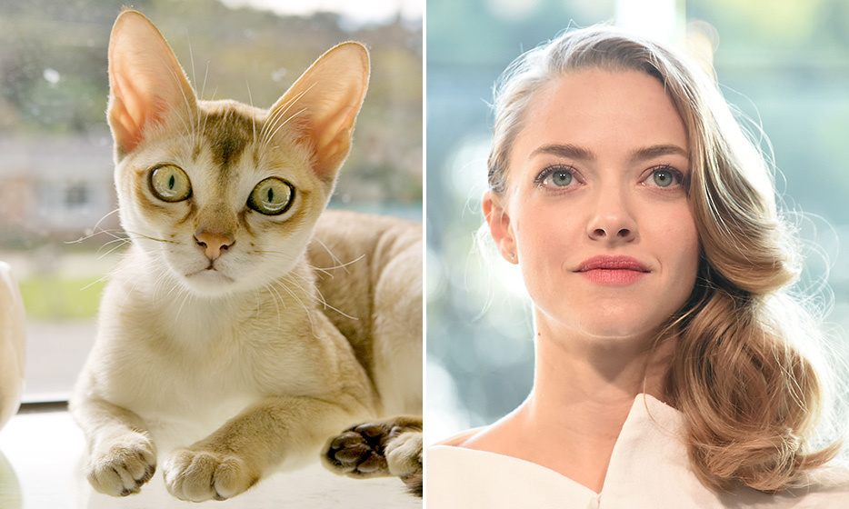 <h4>SINGAPURA + AMANDA SEYFRIED</h4>