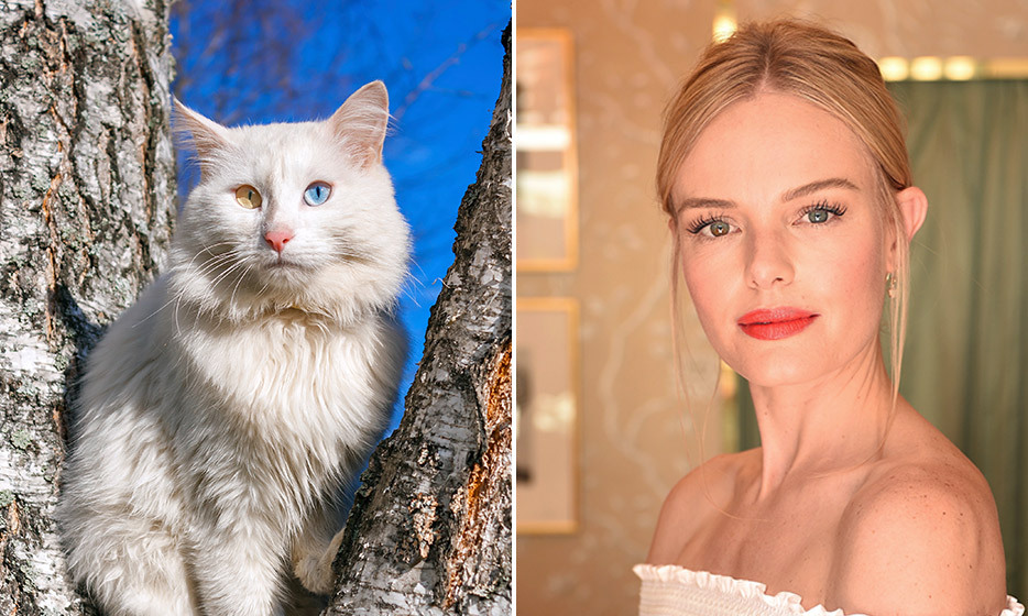 <h4>TURKISH ANGORA + KATE BOSWORTH</h4>