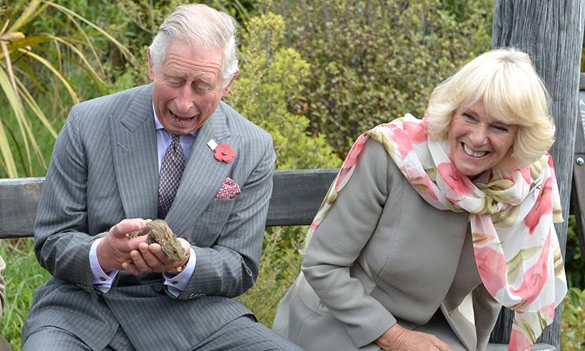 The Duchess of Cornwell was overjoyed to see her husband Prince Charles struggle to contain an overzealous lizard during the couple's visit to the Orokonui Ecosanctuary in New Zealand.  