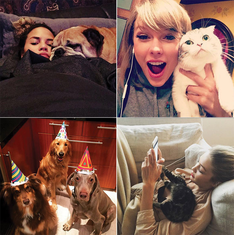 From Taylor Swift and her cats to Chrissy Teigen and her pup Puddy,  stars love to pose with their pampered friends on social media.