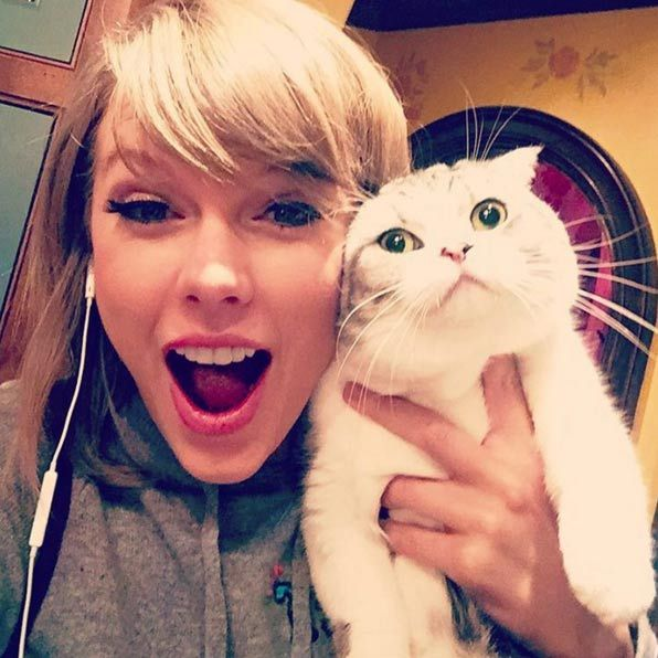 Meredith Grey, named after the <em>Grey's Anatomy</em> character, is one of the fluffiest members of Taylor Swift's squad. She shares the title with her sister Olivia Benson.  