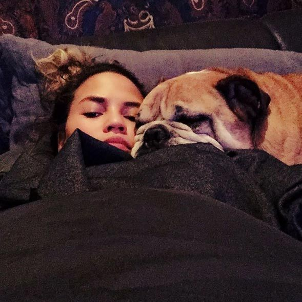 Chrissy Teigen and her husband John Legend have a family of dogs, including bulldogs Pippa and Puddy, who tied the knot in an amusing video to raise money for charity in March 2014.