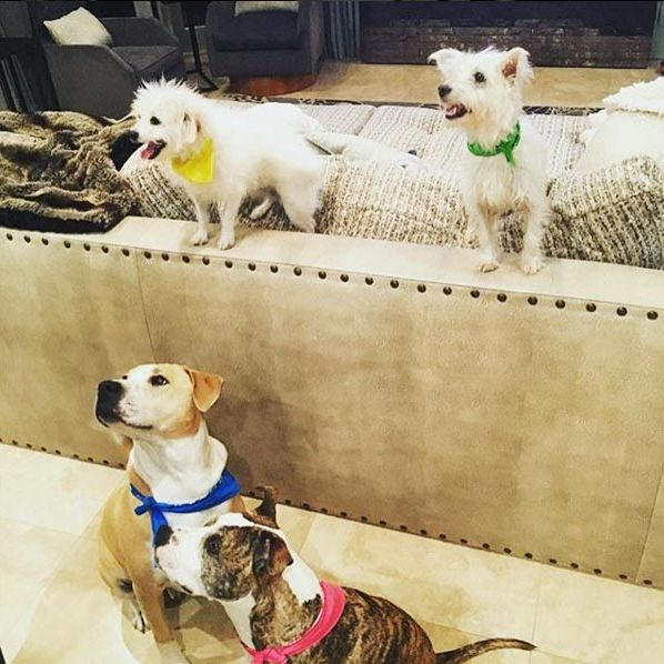 Kaley Cuoco has adopted a number of dogs and regularly posts pictures of them on social media, such as this snap where each wears a different coloured bandana.