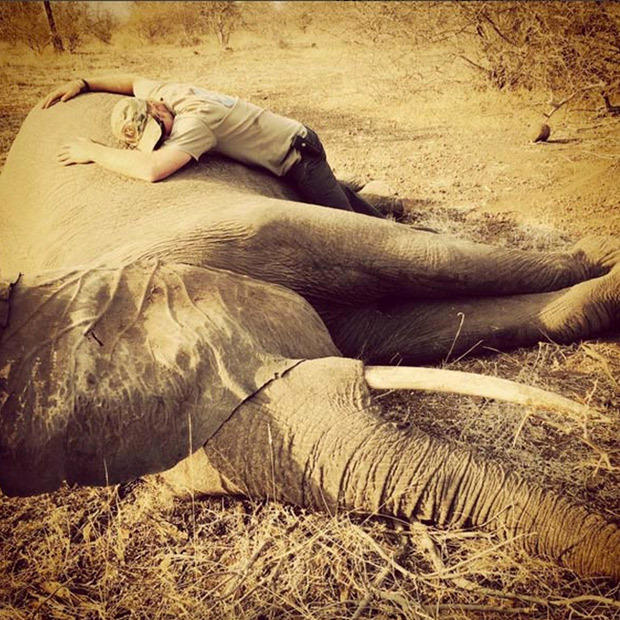<p>The passionate wildlife conservationist takes a moment to embrace a sedated elephant at Kruger National Park. The prince visited the park to see the work of the Tusk Trust organization, which works hard to save animals from poachers. </p>