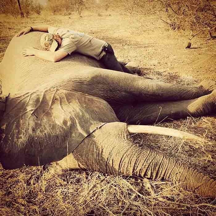 <p>In a breathtaking photo from his personal photo album, Prince Harry hugs with a sedated elephant in South Africa's Kruger National Park. The prince visited the park to shine a light on the work its staff is doing to protect wildlife.</p>