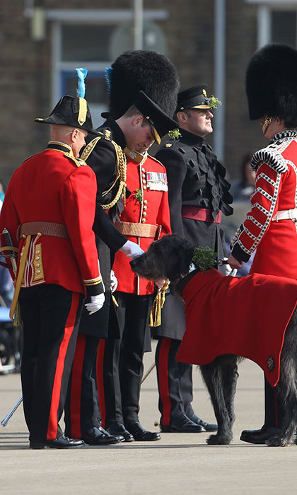 Prince William presents a sprig of shamrock to the Irish Guards' regimental mascot, an Irish wolfhound named Domhnall.