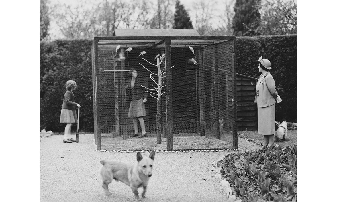 In April 1940, a young Princess Elizabeth visited the aviary in the grounds of the Royal Lodge, Windsor, with her mother Queen Elizabeth and younger sister Princess Margaret.
