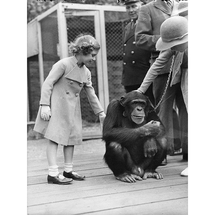 The Queen enjoyed regular visits to the zoo as a child, and is pictured here with a chimpanzee in the early 1930s.