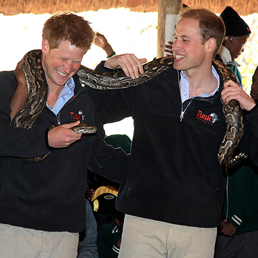 The royal brothers proved that they were a fearless duo when they held on to a African rock python in Botswana.