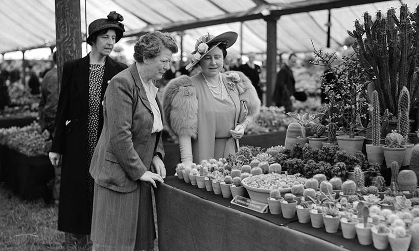 The Queen Mother enjoys the widespread variety of cacti at the Chelsea Flower Show in 1950.