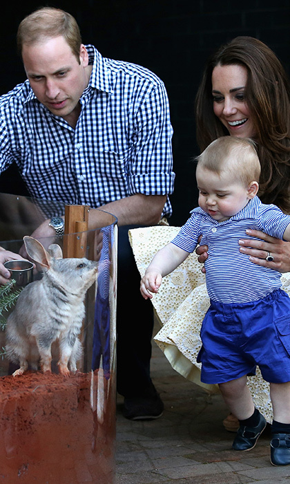 William and Kate delighted George with a visit to the Taronga Zoo in Australia. Kate lovingly held the young prince steady while he met a cuddly Bilby called George.