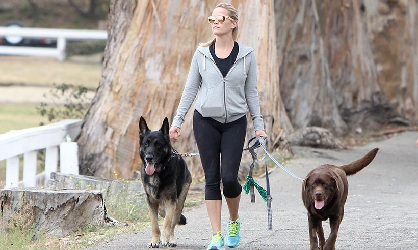 Oscar-winner Reese Witherspoon got some fitness in with her pet pooches in Los Angeles. 