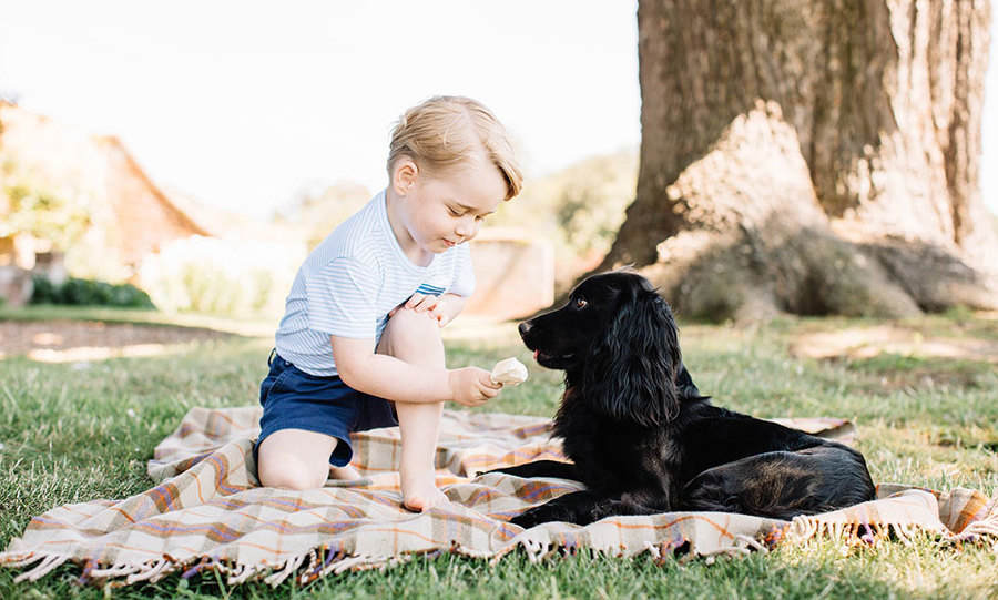 <p>The family's pet dog Lupo has featured in official portraits before, and on George's third birthday, the cocker spaniel once again played a starring role.</p>