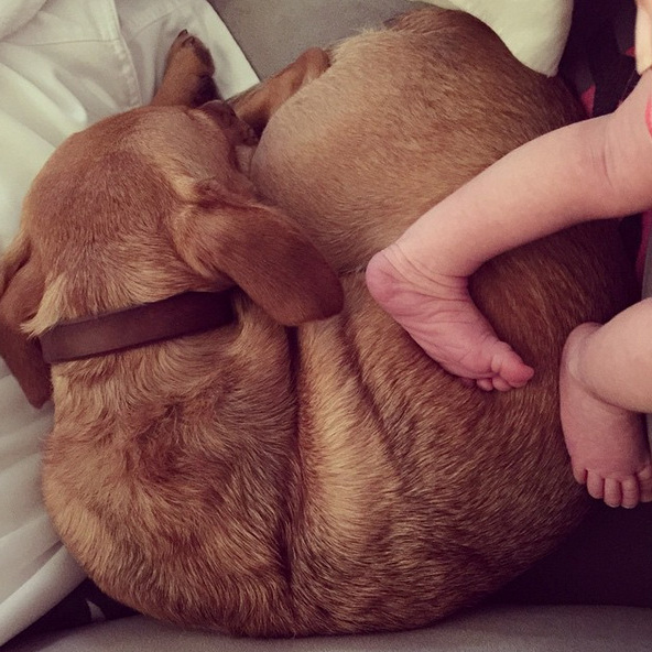 Those sweet little feet. Haylie Duff had the help of her furry companion with the introduction of her baby girl.