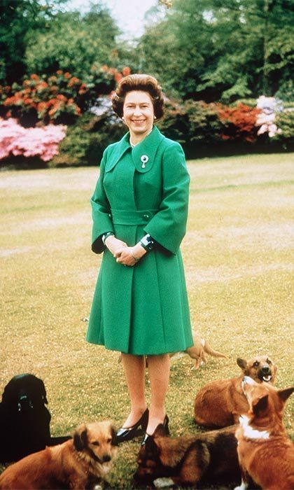 Dogs have a special place at the estate. From the Labradors that the Queen breeds here to the memorials for past royal pets.