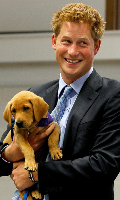 During a visit to the charity Canine Partners Training Centre, Prince Harry cuddled an eight-week-old puppy called Veyron. The charity teams guide dogs to people with disabilities including injured soldiers - a community that Harry has long supported.