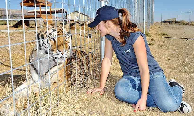 Actress Minka Kelly visited Safe Haven Wildlife Sanctuary in Nevada to help IFAW raise awareness about the exploitation of lions, tigers and other big cats. 