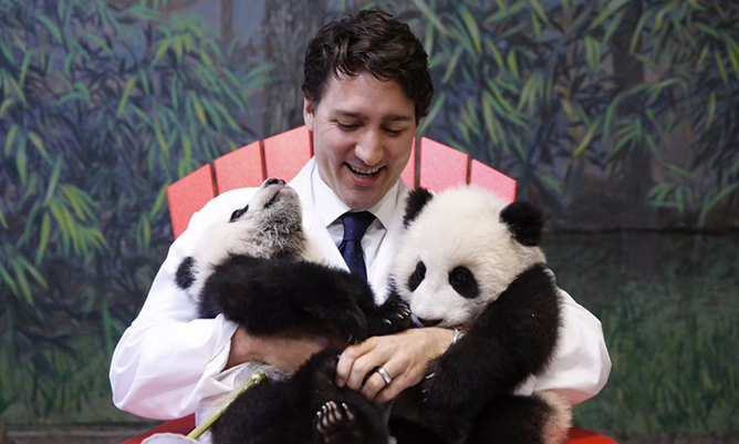 Prime Minister Justin Trudeau was on hand at the Toronto Zoo on March 7 to announce the names of the adorable new panda bear cubs, four-month old brother and sister Jia Panpan (Canadian hope) and Jia Yueyue (Canadian joy). <br>Photo: Twitter/@justintrudeau