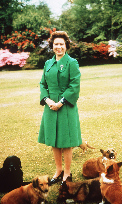 """When I worked at the palace, we actually had a royal menu for the dogs,"" Darren said.