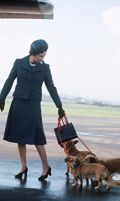 """The worst time was whenever we flew to Balmoral, flew up to Aberdeen,"" said the chef. ""We'd all have to be in our suits because we were travelling with the Queen and she'd take the dogs up and the dogs would lay by your feet and you'd get dog hairs everywhere. You'd try and push them away without them yelping at you.""