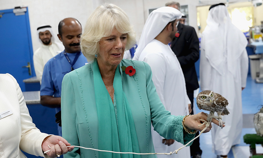 Here, Camilla holds a burrowing owl at the world's largest avian hospital in Abu Dhabi. While there, the royal learned about the history and importance of falconry in Arab culture.