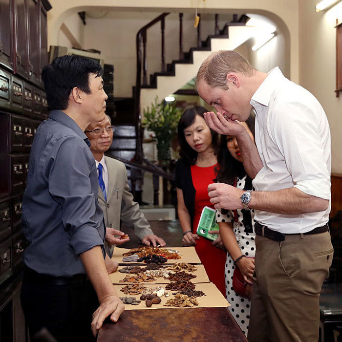 William visited a traditional medicine shop on Lan Ong Street in Hanoi's Old Town to learn more about traditional medicine and its links to the illegal wildlife trade. 