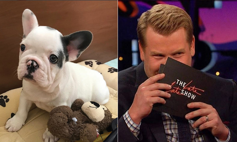 The week was high in cuteness on the Instagram feeds of some of our favourite celebs: from the newest four-legged addition to Lady Gaga's clan to Reese Witherspoon's new makeup artist (hint: it's her four-year-old son on the job!). James Corden was tickled to discover his latest gig and couldn't contain his excitement on the <em>Late, Late show</em>.