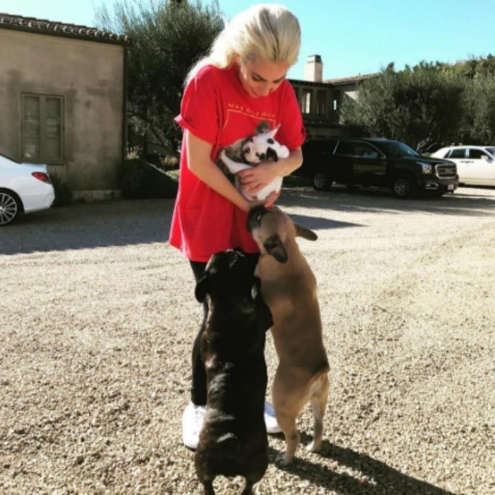 "<h3><a href=""/tags/0/lady-gaga/"" target=""_blank"">Lady Gaga</a></h3><p>Lady Gaga has added a furry new friend to her brood. The mother monster showed off her new pup on Instagram.</p><p>Gaga posted a photo of introducing her new ""little pig"" to her two older dogs. ""I'm proud to announce we added a new member to the #JOANNE family. I haven't named him yet but I call him both cowpig and moopig in the meantime!""</p><p>Photo: &copy; Instagram</p>"