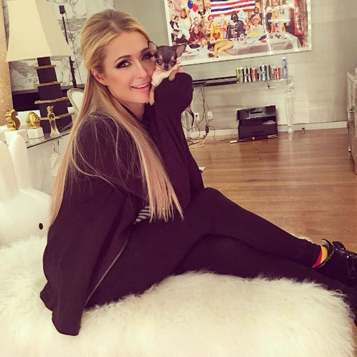 "<h3><a href=""/tags/0/paris-hilton/"" target=""_blank"">Paris Hilton</a></h3><p>Paris Hilton has a new ""baby girl!"" The socialite introduced her new black-and-brown teacup puppy to her Instagram followers, writing, ""Meet the newest member to the @HiltonPets family. What should I name this lil cutie?"" While the adorable pup doesn't have a name as of yet, Paris already seems smitten by her new pet. The DJ noted, ""Her little smile melts my heart.""</p><p>Photo: &copy; Instagram</p>"