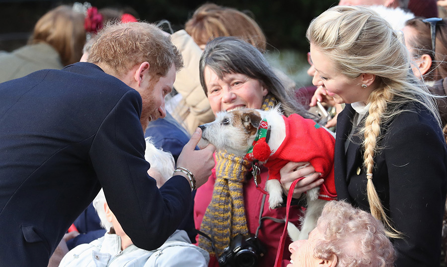 Prince Harry stopped to wish this festive little pup a very Happy Christmas following church service on Dec. 25. 
