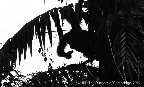 <p>She managed to capture a shot of an endangered orangutan swinging from a tree.</p>