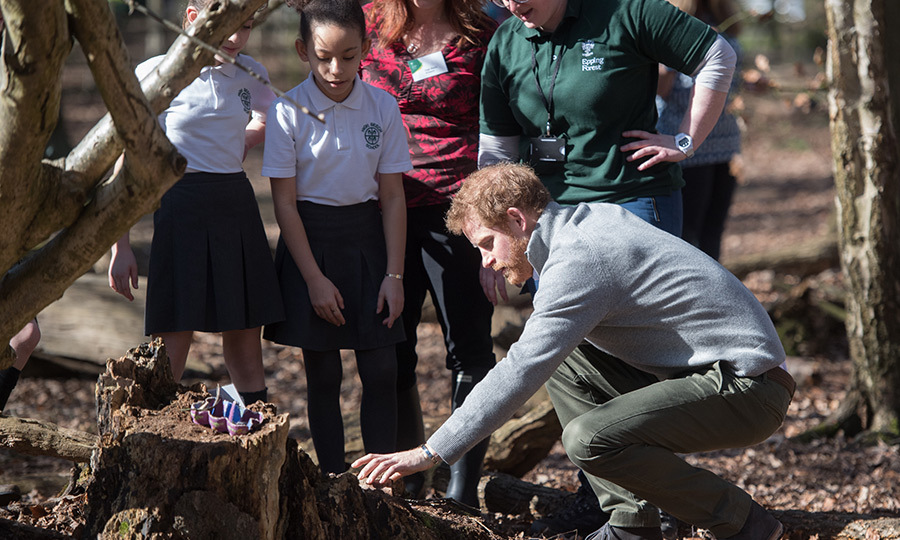 Prince Harry continued his busy week of engagements with a visit to Epping Forest on Wednesday (Mar. 15), where he was shown around the Queen's Commonwealth Canopy project by a group of excited children.