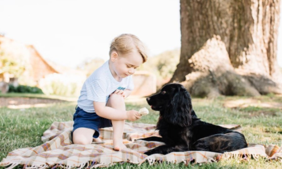 "<h2><strong>Prince William, <a href=""/tags/0/kate-middleton/"">Duchess Kate</a>, Prince George and Princess Charlotte</strong></h2><p>The Cambridge's royal pooch Lupo has been around longer than the kids. Before he was seen here, in <strong><a href=""/tags/0/prince-george/"">Prince George</a></strong>'s third birthday photos, Lupo was often spotted at polo matches or taking walks on the beach with <strong><a href=""/tags/0/prince-william-and-kate/"">William and Kate</a></strong>. Once George and Charlotte arrived, Lupo took the backseat, but not before starring in his own <em>The Adventures of Lupo</em> children's books.</p><p>Photo: Matt Porteous</p>"